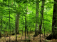 Primeval beech forest of Uholka - Cooperation with Ukraine
